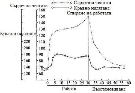 промени в сърдечната честота и в кръвното налягане