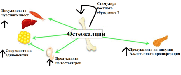 остеокалцин