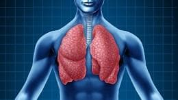 бели дробове