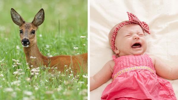 елен и бебе
