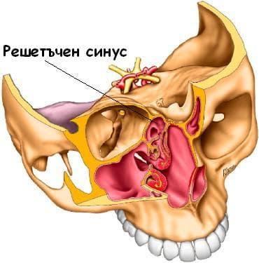 етмоидален синус