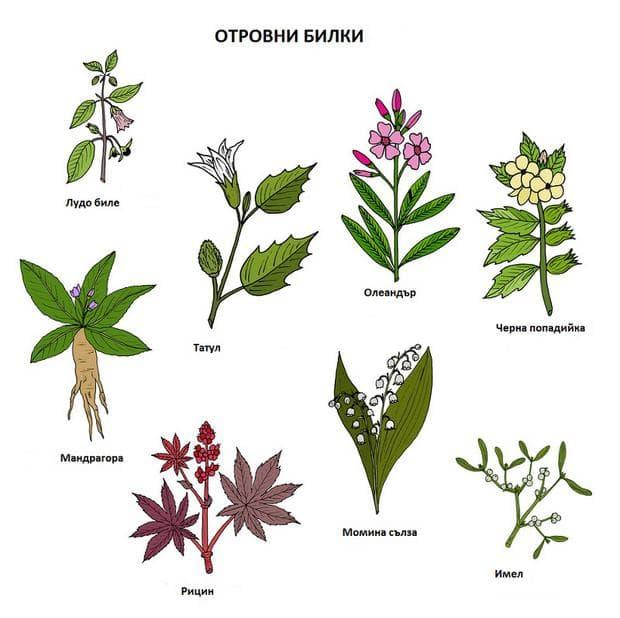 Отровни билки