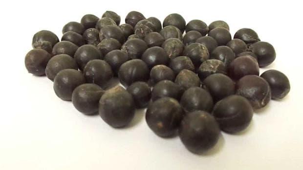 семена на сапунено орехче