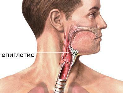 Епиглотис