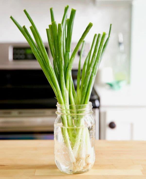 Съхраняване на зелен лук