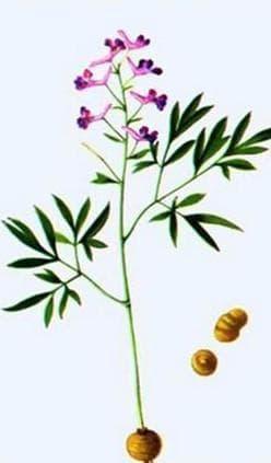 Схема на растението
