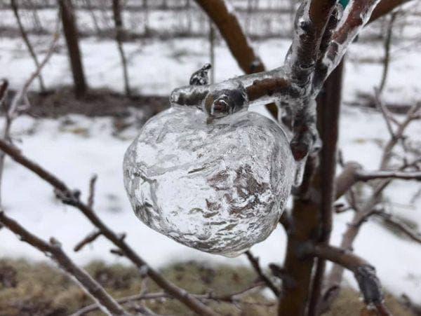 Ледени ябълки
