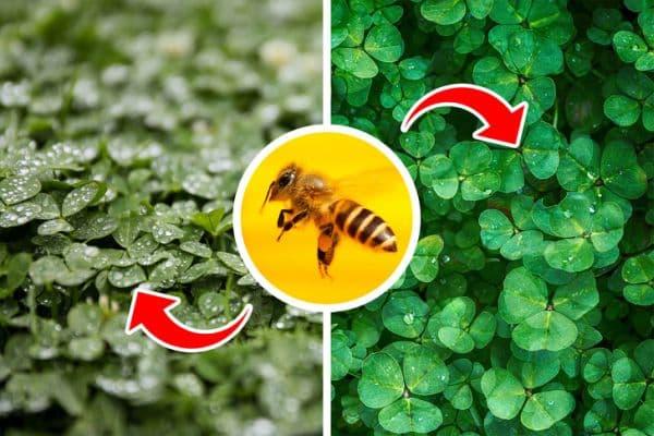 Пчели опрашват цветни култури