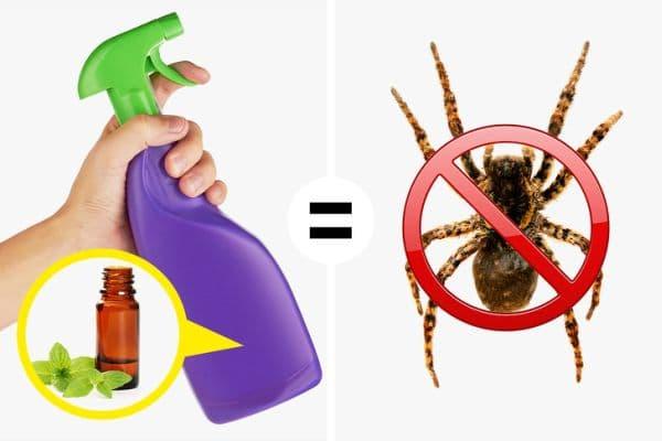 Прогонване на вредители с ментово масло