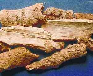 кора на лодхра