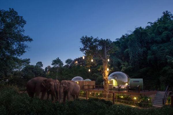 спане в балон в джунглата заобиколен от слонове в Тайланд