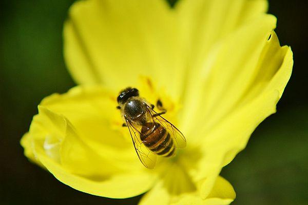 Полезни насекоми в градината
