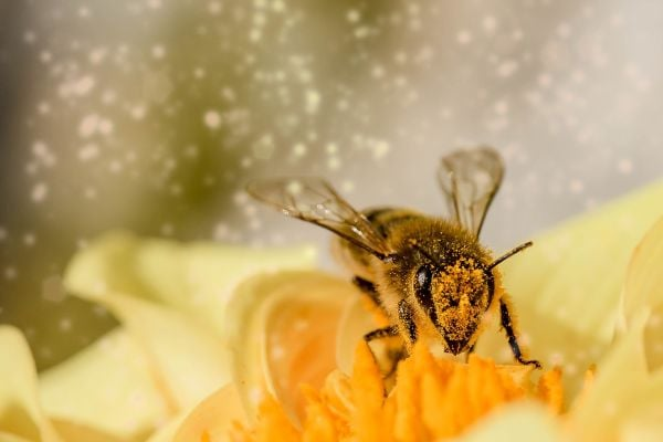 пчела върху цвете
