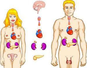 Ендокринни заболявания