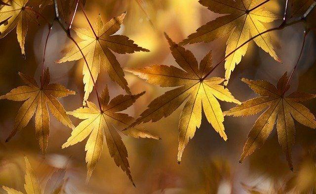 Листа, есенни листа