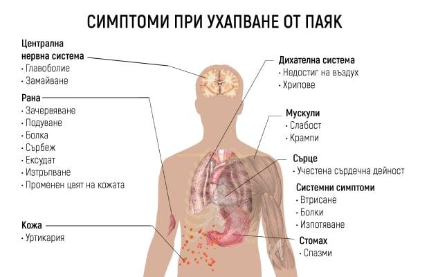 Възможни симптоми при ухапване от паяк