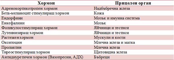 таблица хормони на хипофизата и прицелени органи