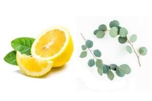 Репелент за комари от лимон и евкалипт
