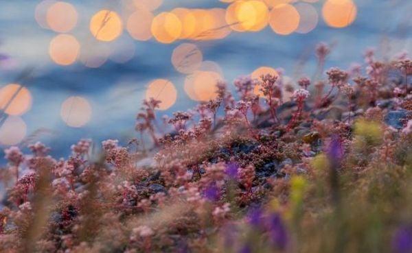 поле, цветя, билки