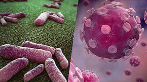 бактерии и вируси