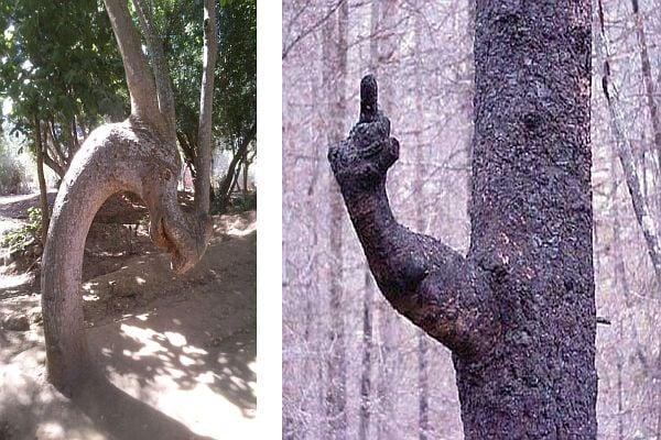 Дървета с причудливи човешки форми