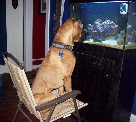 куче пред аквариум
