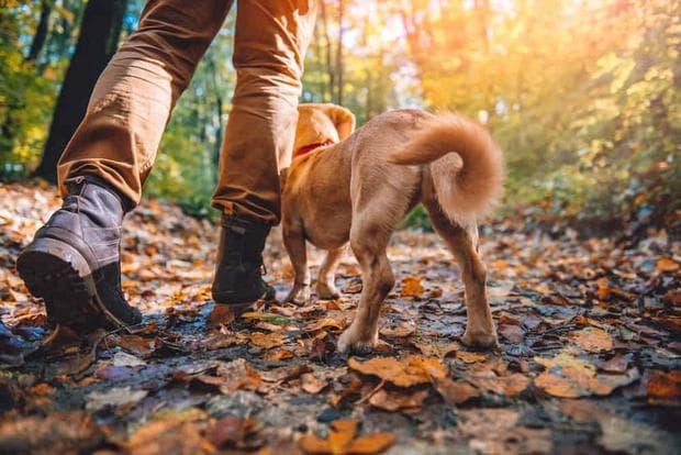 пешеходен туризъм с куче