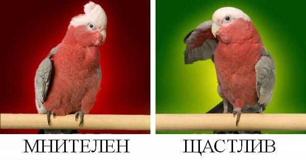 Папагал