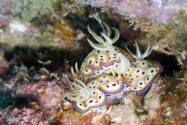 Голохрили - едно от най-красивите морски създания на света