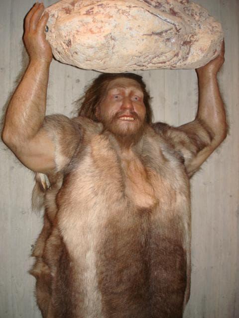 Макет на неандерталец, изобразяващ силата на вида