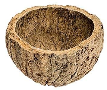 черупка на бразилки орех
