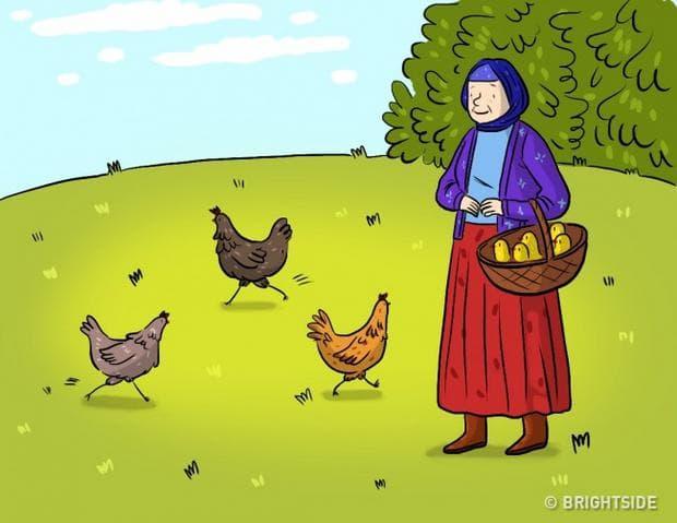 кокошките и яйцата