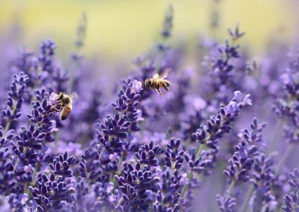 Пчели разкрасяват планетата