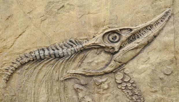 Скелет на ихтиозавър в южен Китай