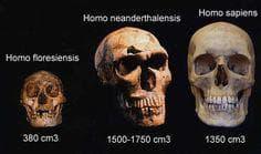 Черепи на Флоренски човек, неандерталец и съвременен човек