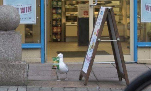 чайка краде чипс