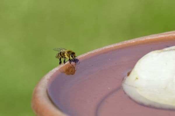 Предотвратяване на изчезването на пчелите