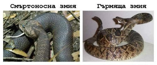 Смъртоносна змия / Гърмяща змия