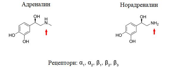 адренлин и норадреналин