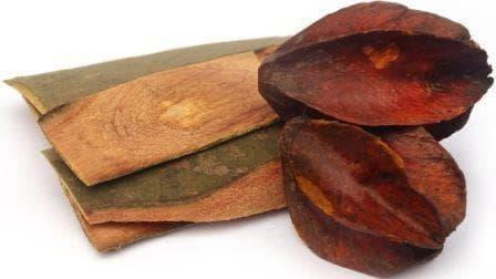 кора и плодове от трминалия арджуна