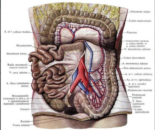 Долна месентериална артерия