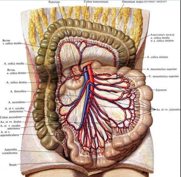 Горена месентериална артерия