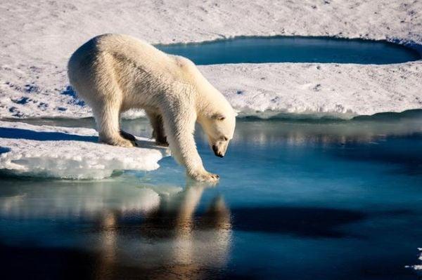 топенето на ледовете в Арктика