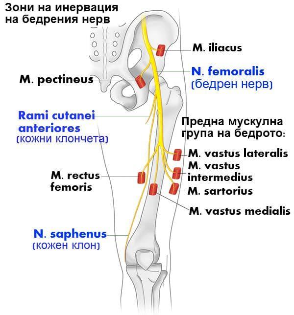 Бедрен нерв