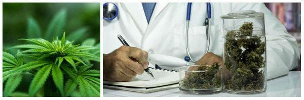 Безопасна употреба на медицински канабис (марихуана)