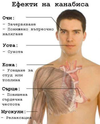Ефекти на канабиса