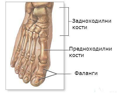 ювенилна остеохондроза на предноходилните кости