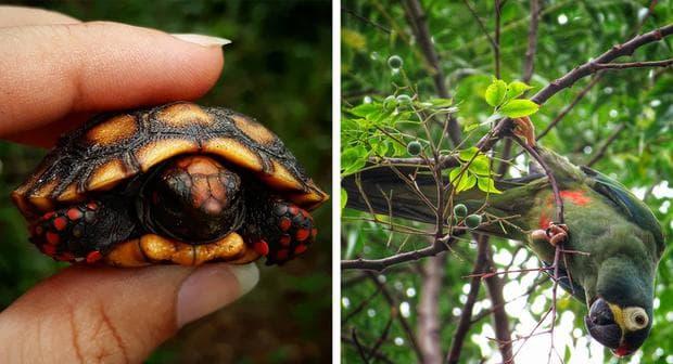 диви животни на бразилска земя