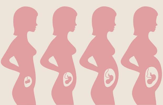 Етапи на бременност