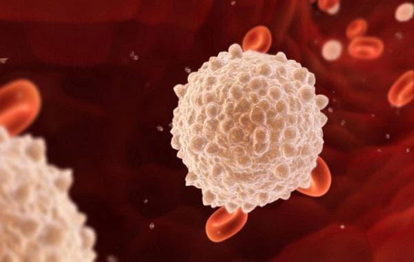 Бели и червени кръвни клетки